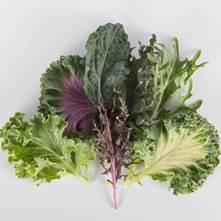 Exotic Kale Blend