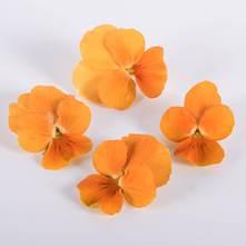 Orange Marmalade Viola