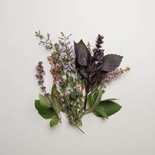 Flowering Herb Sampler
