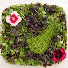 Herbal Sensation