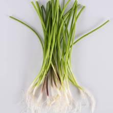 Mixed Allium