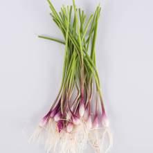 Purplette Onion