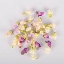 Mixed Bean Blooms