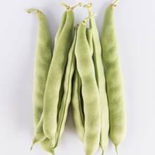 Green Romano Beans