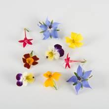 Mini Sorbet Princess Flowers