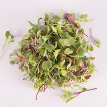 Salad Sensation®