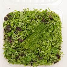 Asian Fine Herbs