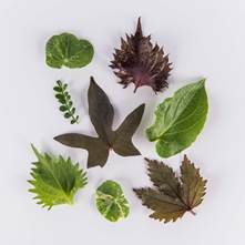 Edible Leaves Sampler