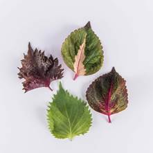 Mixed Shiso Leaves
