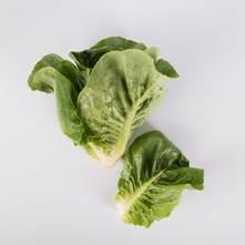 Sweet Romaine Lettuce