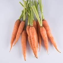 Long Carrots