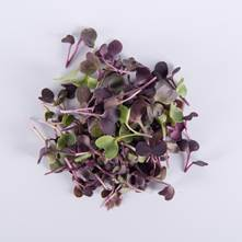Micro Purple Radish