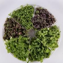 Herbal Sensation™ Small Bites