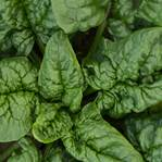 Mixed Spinach