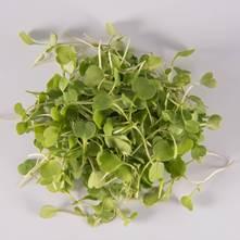Arugula Greens