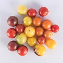 Cherry Specialty Tomatoes