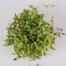 Traditional Thyme