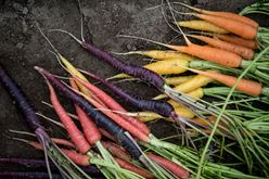 Drum Roll, Please . . . the Vegetable of the Year 2019 is Mixed Carrots! Image