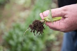 National Soil Health Day: honor healthy soil with us today Image