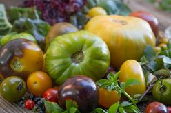 Tomato and Basil: Sun-shiny Taste of Summer Image