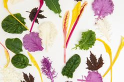 Culinary Artistry: You've Got the Vision & We Provide the Paint Image