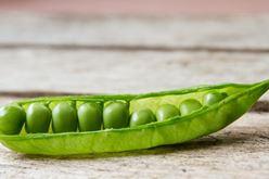 Peas and Quiet Image