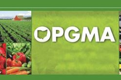 Judit Ender Appointed to Ohio Vegetable & Small Fruit Research & Development Program Image