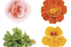Edible Flowers And Herbs In Your Northeast Ohio Garden Image