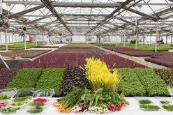 Why Now Is the Time for Visionary Leadership and Reinvention in the Greenhouse Industry Image
