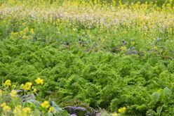 Meet Rodolfo: Lettuce & Greens Image
