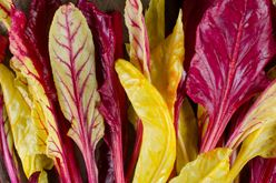 Beet Blush: Not Just For a Pretty Face  Image