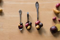 Insights into Potato Sizes – and the Beauty of Small Potatoes Image