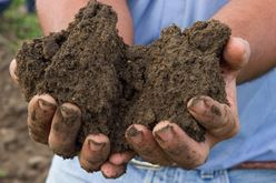 A Success Story Rooted in Soil Image