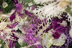 Petite Exotic Kale, Enormous Flavors Image