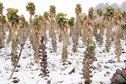 Insights into Winter Farming, Sustainable Farming and More Image