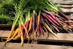 Health Benefits of Carrots  Image