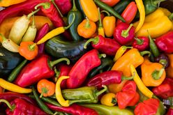 Farm-Fresh Peppers: Experience the Rainbow Image