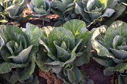 We're Planting Differently This Year! Image