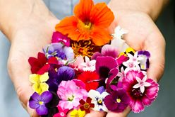 Mixed Edible Flowers: Beauty, Aroma, Flavor – and Poetry Image