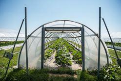 Farmer Lee Jones: Top Ten Summer Crops Image