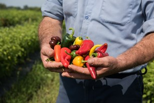 Farm to Table Versus Earth to Table® Thumbnail