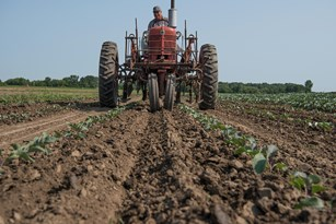 Healthy soil: a look at how and why we rebuild soil health Thumbnail