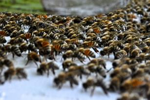 Why Are Bees Important? Thumbnail