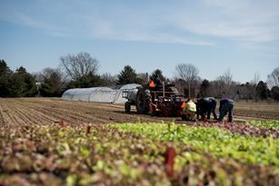 From Planting to Harvesting Lettuce: A Farmer's Story Thumbnail