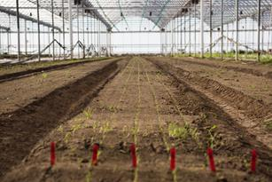 Our Farming Philosophy: Regenerative Farming for Healthy Soil and Crops Thumbnail