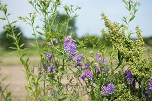 Benefits of cover crops, carbon sequestration & regenerative farming Thumbnail