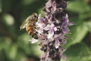 Sustain A Beehive, Earth Day Thumbnail