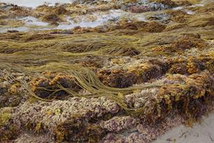 Prannie Rhatigan Explains How to Eat, Bathe and Farm with Seaweed Thumbnail