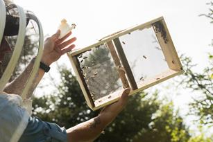 Bees and sustainability: choreography of their delicate dance Thumbnail