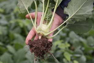 Putting Quality Plants Forward Thumbnail